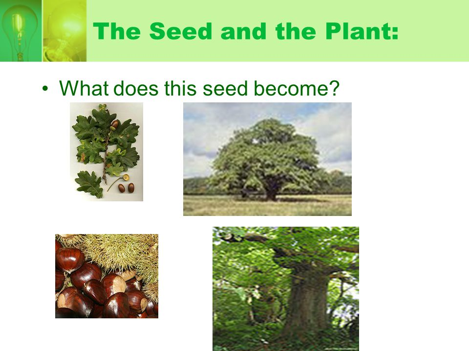 The Seed and the Plant: What does this seed become
