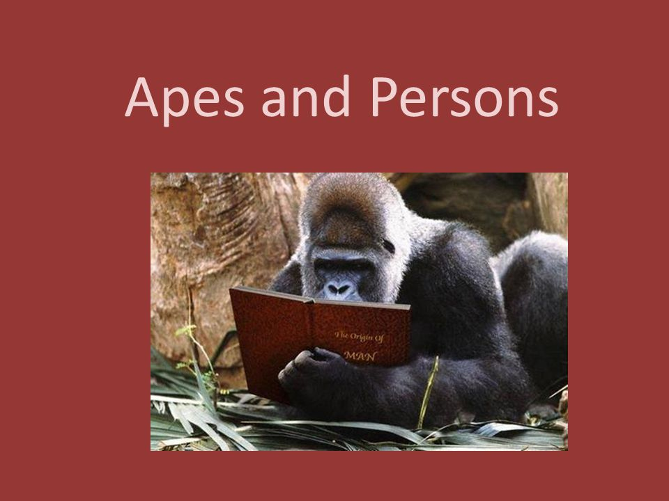Apes and Persons