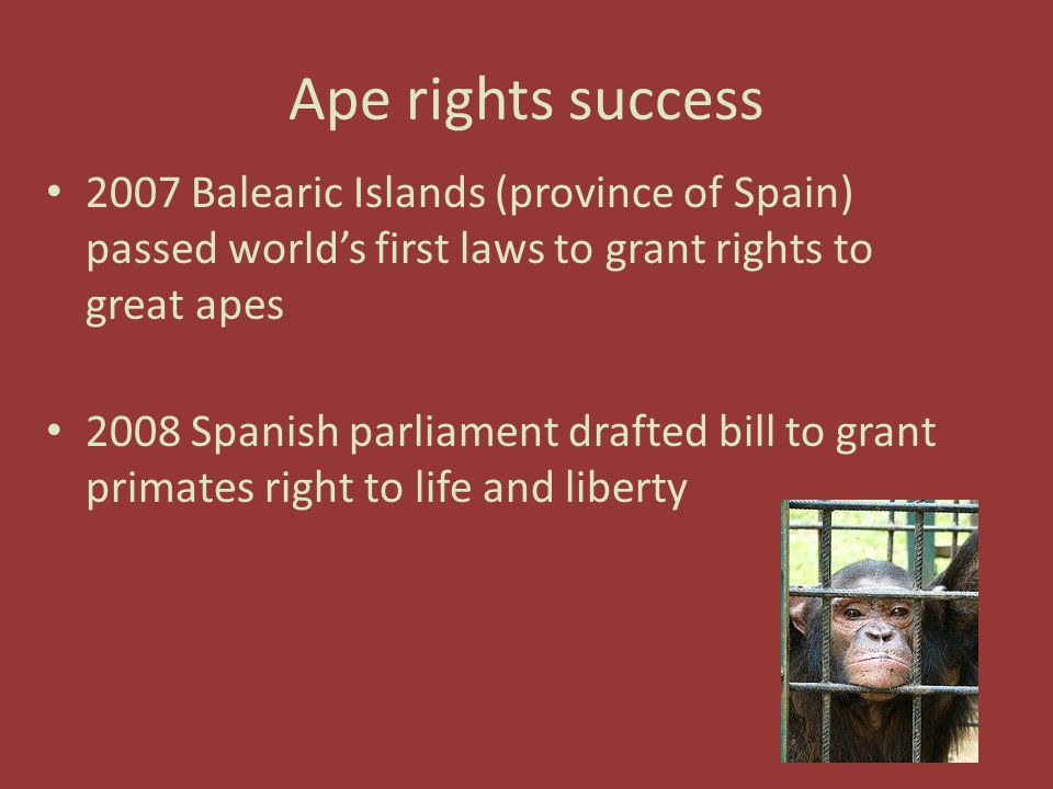 Ape rights success 2007 Balearic Islands (province of Spain) passed world's first laws to grant rights to great apes 2008 Spanish parliament drafted bill to grant primates right to life and liberty