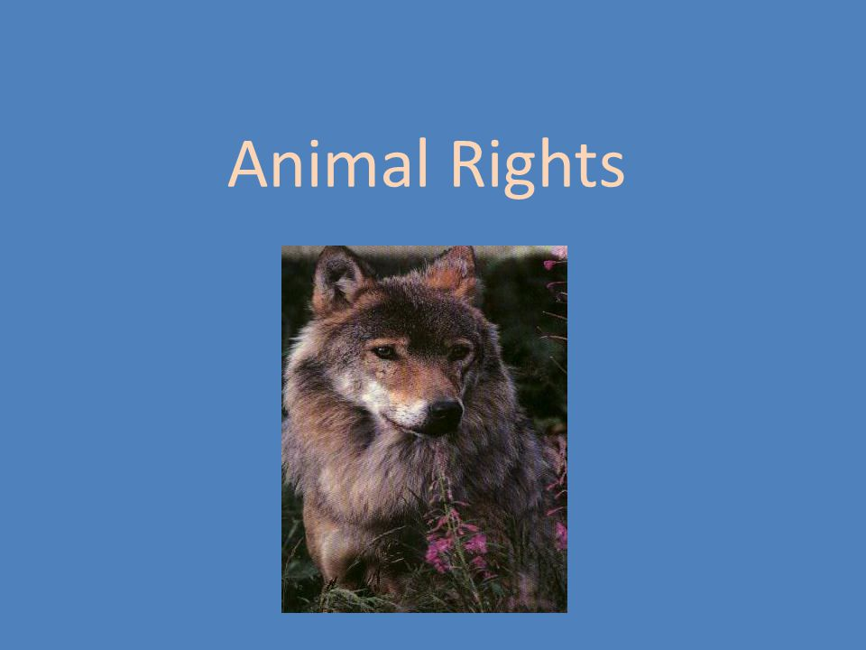 Tom Regan Contemporary American Philosopher Deontologist, in the tradition of Kant Specialist in animal rights The Case for Animal Rights (1983) Animal Rights, Human Wrongs (1980)