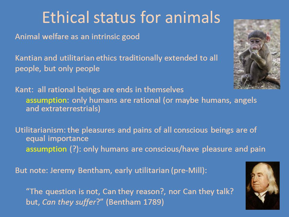 Ethical status for animals Animal welfare as an intrinsic good Kantian and utilitarian ethics traditionally extended to all people, but only people Kant: all rational beings are ends in themselves assumption: only humans are rational (or maybe humans, angels and extraterrestrials) Utilitarianism: the pleasures and pains of all conscious beings are of equal importance assumption ( ): only humans are conscious/have pleasure and pain But note: Jeremy Bentham, early utilitarian (pre-Mill): The question is not, Can they reason , nor Can they talk.