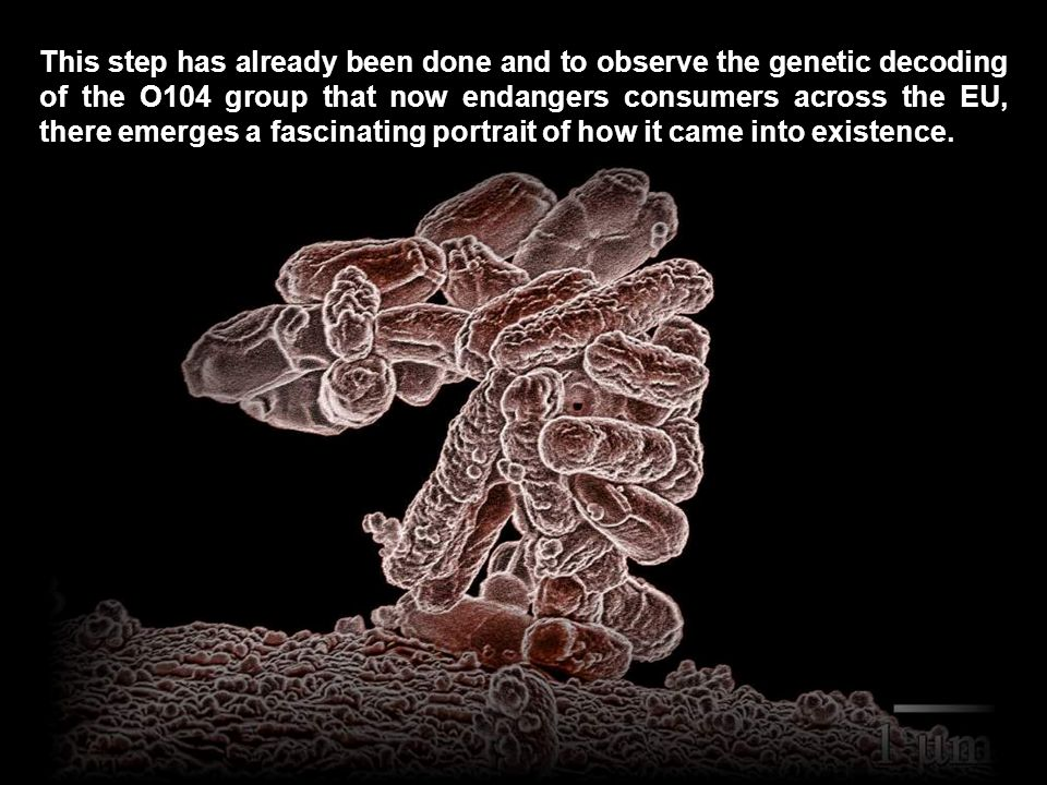 Therefore, if someone wanted to trace the origins of the bacteria, so you should do is reverse engineer the genetic code of E.coli, and determine to which antibiotics were exposed during development.