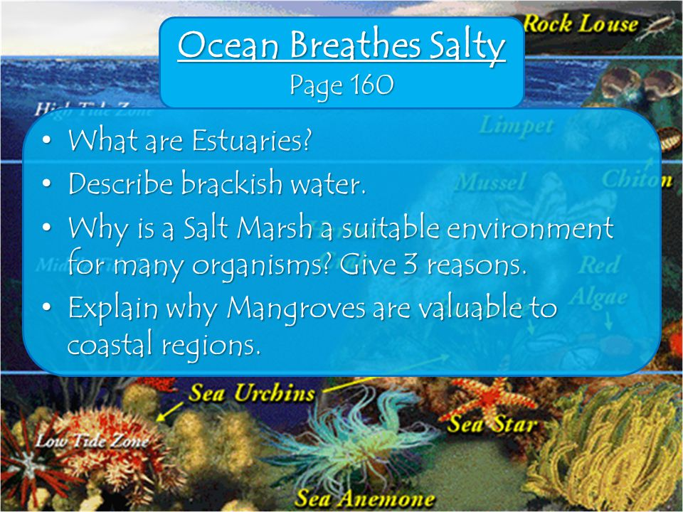 Ocean Breathes Salty Page 160 What are Estuaries. What are Estuaries.