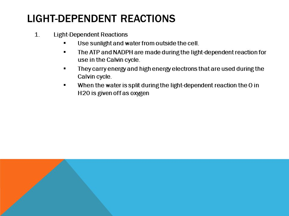 LIGHT-DEPENDENT REACTIONS 1.Light-Dependent Reactions  Use sunlight and water from outside the cell.  The ATP and NADPH are made during the light-de