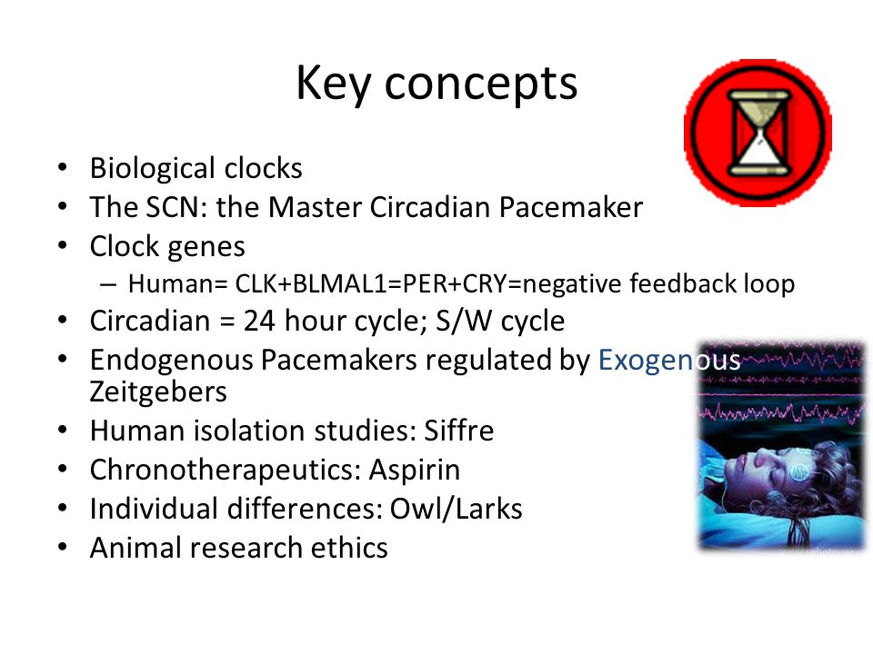 Key concepts Biological clocks The SCN: the Master Circadian Pacemaker Clock genes – Human= CLK+BLMAL1=PER+CRY=negative feedback loop Circadian = 24 h