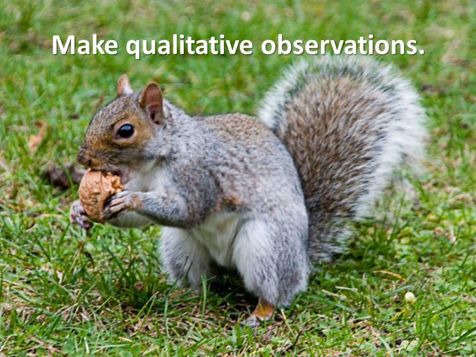 Make qualitative observations.