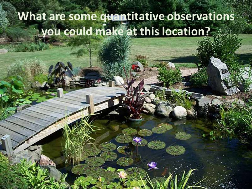 What are some quantitative observations you could make at this location