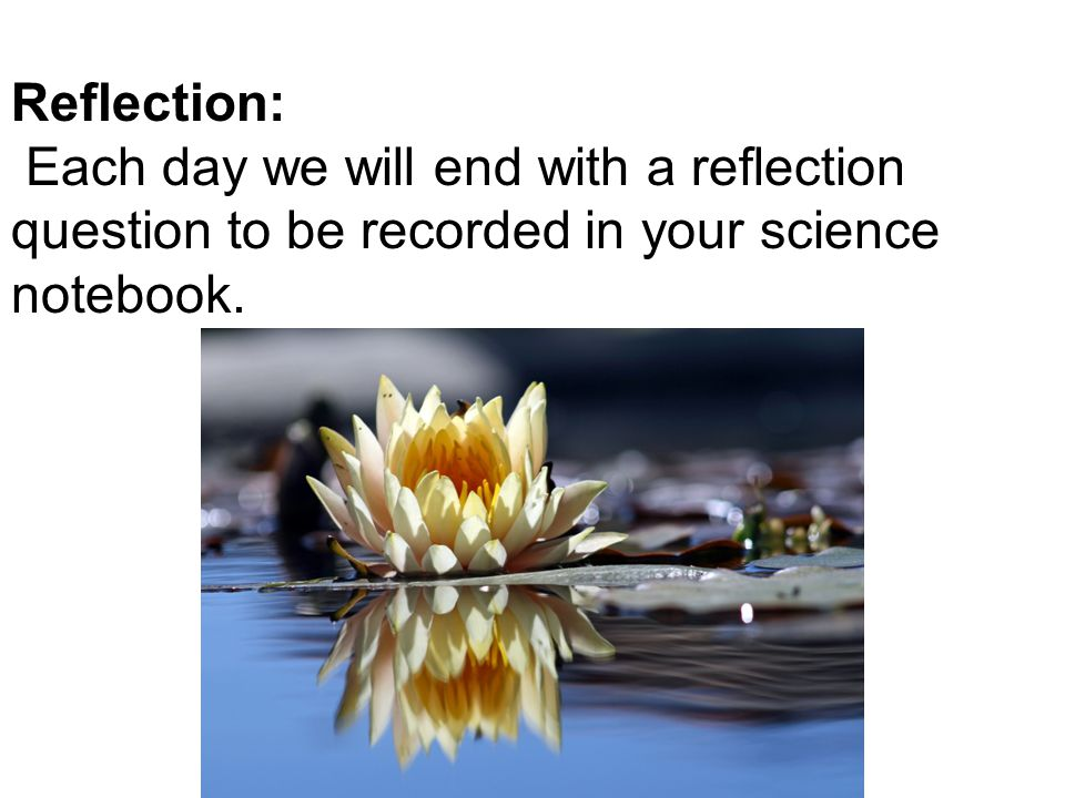 Reflection: Each day we will end with a reflection question to be recorded in your science notebook.