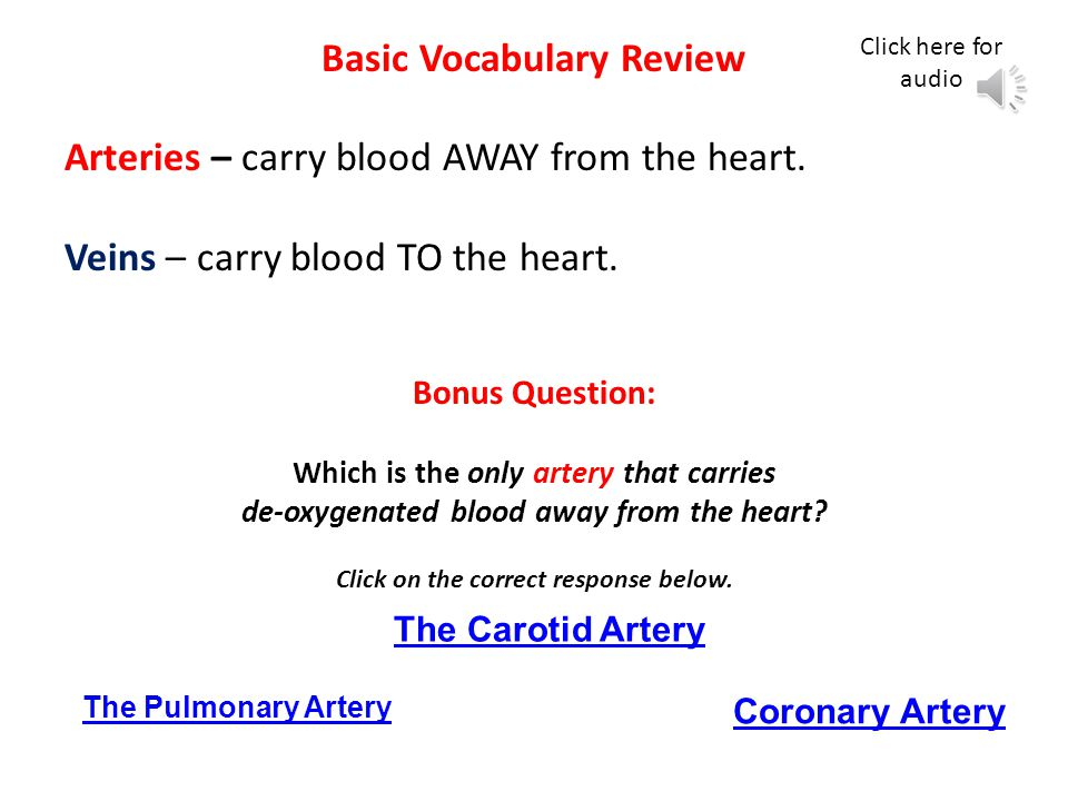 Basic Vocabulary Review Arteries – carry blood AWAY from the heart.