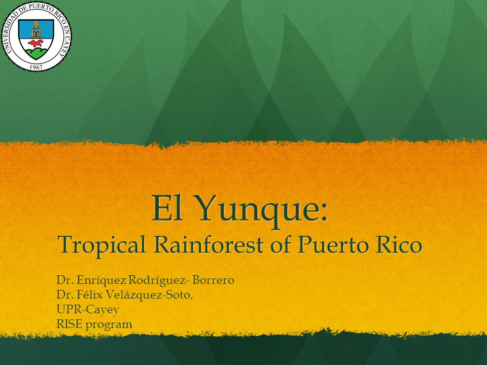 El Yunque: Tropical Rainforest of Puerto Rico Dr. Enríquez Rodríguez- Borrero Dr.