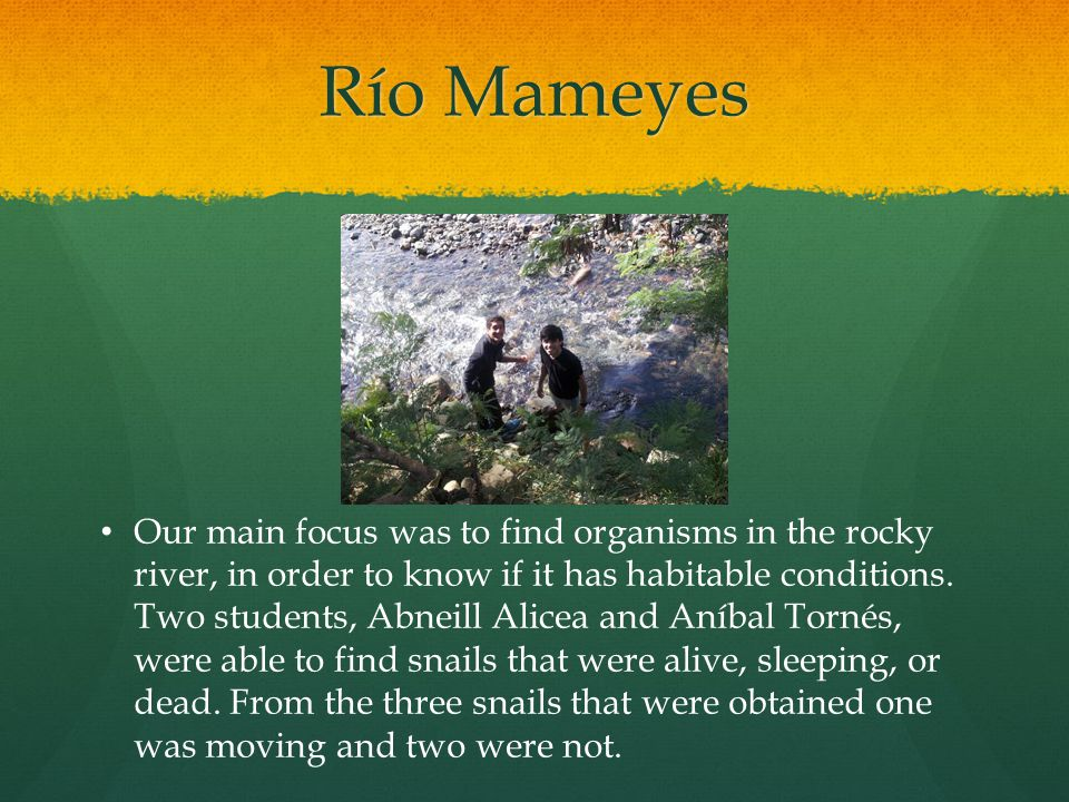 Río Mameyes Our main focus was to find organisms in the rocky river, in order to know if it has habitable conditions.