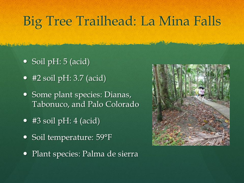 Big Tree Trailhead: La Mina Falls Soil pH: 5 (acid) Soil pH: 5 (acid) #2 soil pH: 3.7 (acid) #2 soil pH: 3.7 (acid) Some plant species: Dianas, Tabonuco, and Palo Colorado Some plant species: Dianas, Tabonuco, and Palo Colorado #3 soil pH: 4 (acid) #3 soil pH: 4 (acid) Soil temperature: 59°F Soil temperature: 59°F Plant species: Palma de sierra Plant species: Palma de sierra