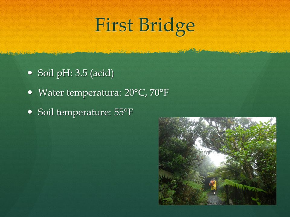 First Bridge Soil pH: 3.5 (acid) Soil pH: 3.5 (acid) Water temperatura: 20°C, 70°F Water temperatura: 20°C, 70°F Soil temperature: 55°F Soil temperature: 55°F