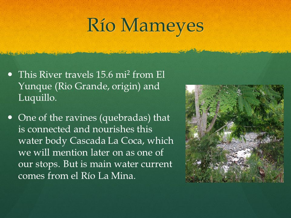 Río Mameyes This River travels 15.6 mi 2 from El Yunque (Rio Grande, origin) and Luquillo.