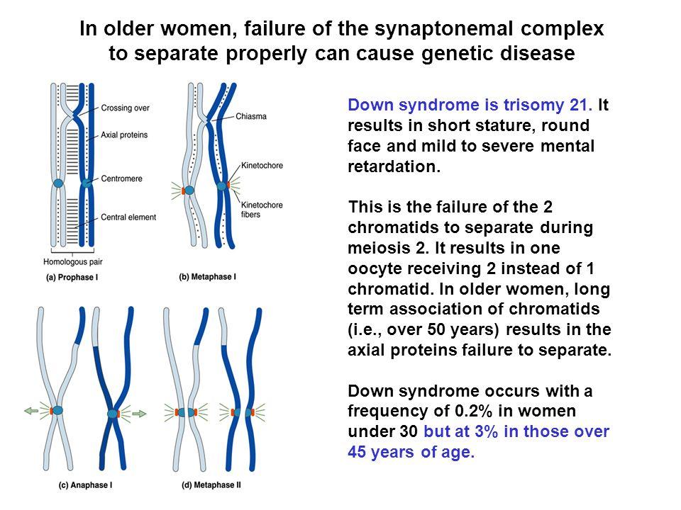 Spermatogenesis occurs in the seminiferous tubules The mammalian testes are divided into many lobules, and each lobule contains many tiny seminiferous tubules.