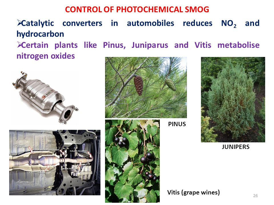 CONTROL OF PHOTOCHEMICAL SMOG  Catalytic converters in automobiles reduces NO 2 and hydrocarbon  Certain plants like Pinus, Juniparus and Vitis meta