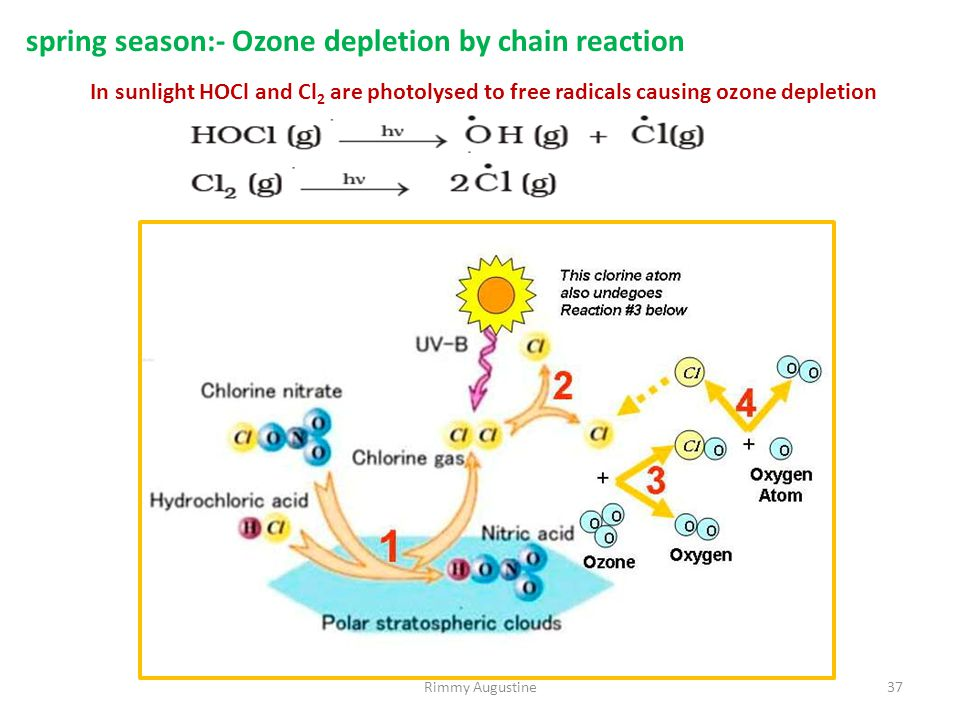 Rimmy Augustine37 spring season:- Ozone depletion by chain reaction In sunlight HOCl and Cl 2 are photolysed to free radicals causing ozone depletion