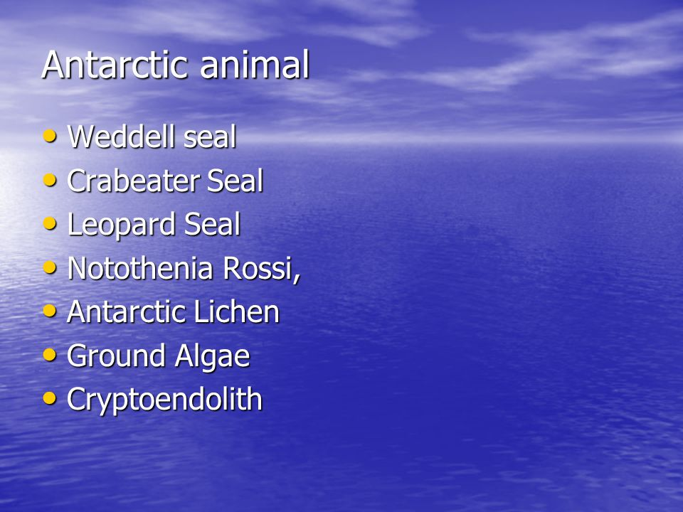 Weddell Seal Their fat protects seals efficiently from the cold, both at sea and outside.