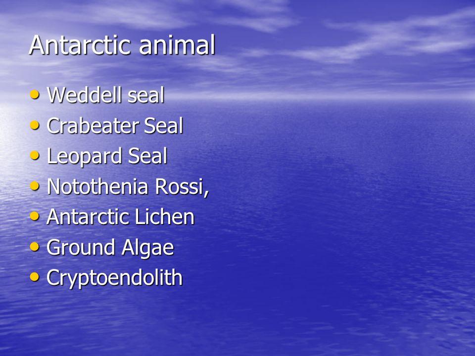 Antarctic animal Weddell seal Weddell seal Crabeater Seal Crabeater Seal Leopard Seal Leopard Seal Notothenia Rossi, Notothenia Rossi, Antarctic Lichen Antarctic Lichen Ground Algae Ground Algae Cryptoendolith Cryptoendolith