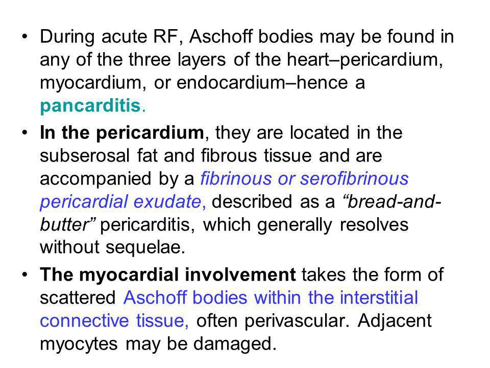 During acute RF, Aschoff bodies may be found in any of the three layers of the heart–pericardium, myocardium, or endocardium–hence a pancarditis. In t