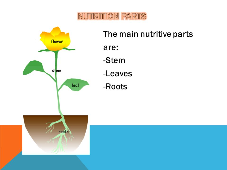 The main nutritive parts are: -Stem -Leaves -Roots
