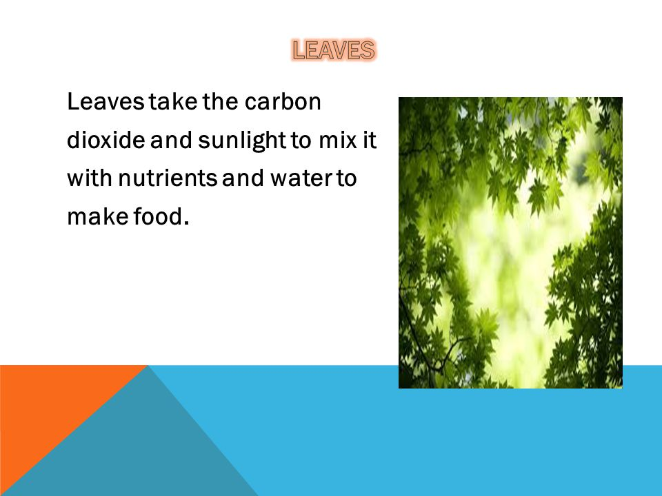 Leaves take the carbon dioxide and sunlight to mix it with nutrients and water to make food.
