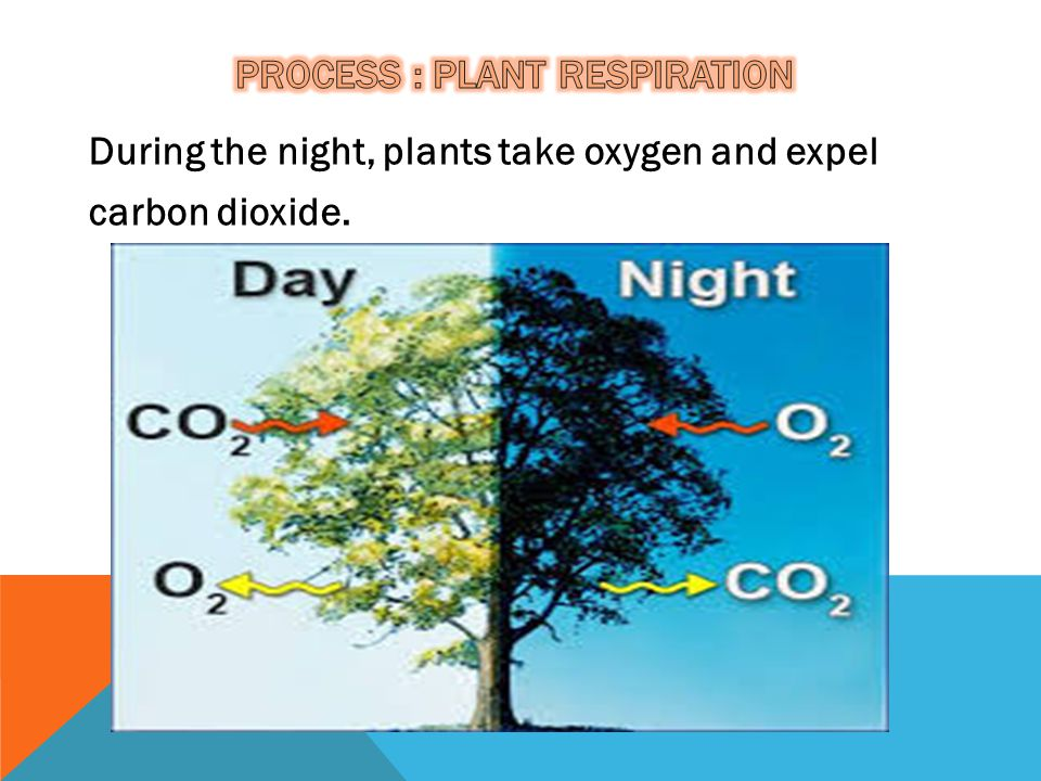 During the night, plants take oxygen and expel carbon dioxide.