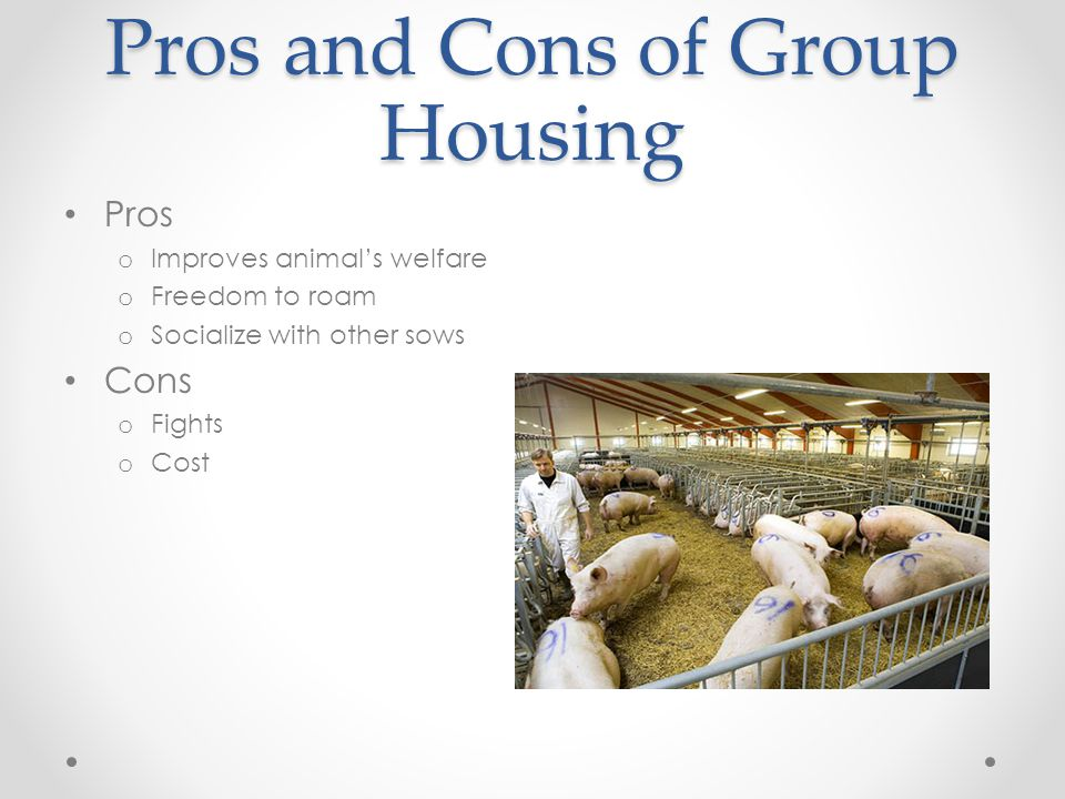 Pros and Cons of Group Housing Pros o Improves animal's welfare o Freedom to roam o Socialize with other sows Cons o Fights o Cost