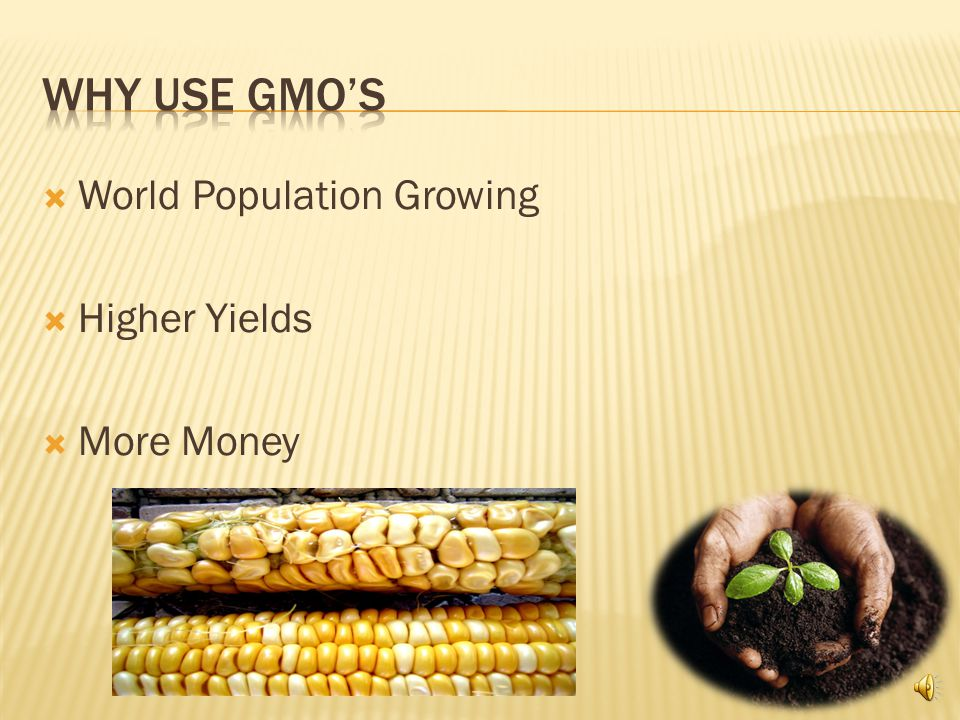  Genetically Modified Organisms  What Does This Mean  Specifically Corn