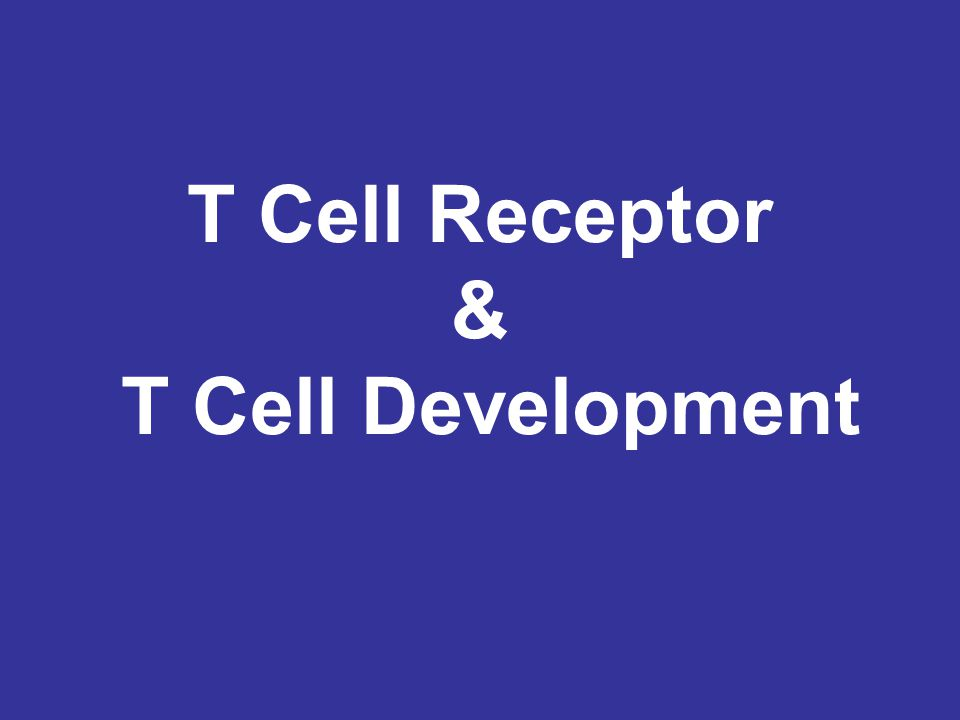 2 Questions for the next 2 lectures :  How do you generate a diverse T cell population with functional TCR rearrangements.