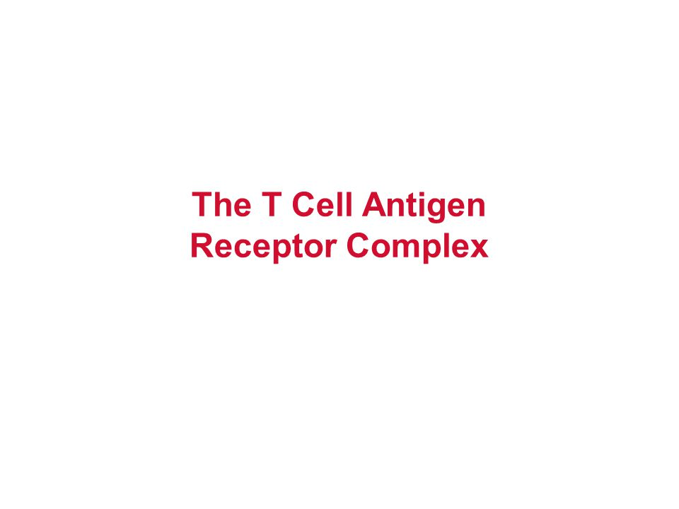 2/9/04 T-cell Receptor T cells also express other membrane receptors that do not recognize antigen but participate in responses to antigens: these are collectively called accessory molecules.