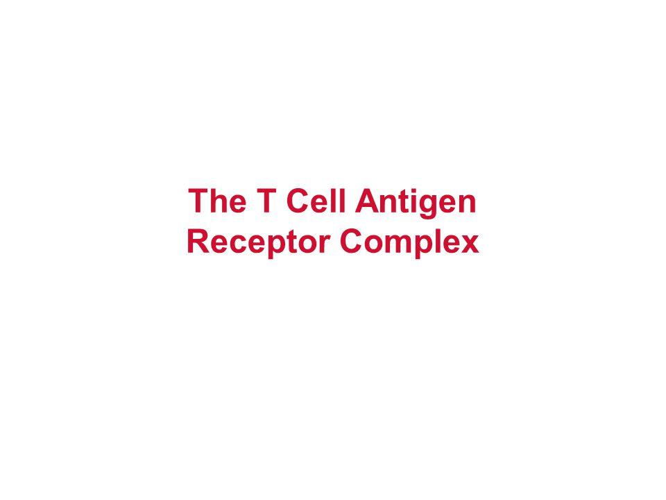 Rearranged TcR  1° transcript Spliced TcR  mRNA L & V  x52 D1D1 J C1C1D2D2 J C2C2 Germline TcR  TcR  gene rearrangement SOMATIC RECOMBINATION D-J Joining V-DJ joining C-VDJ joining