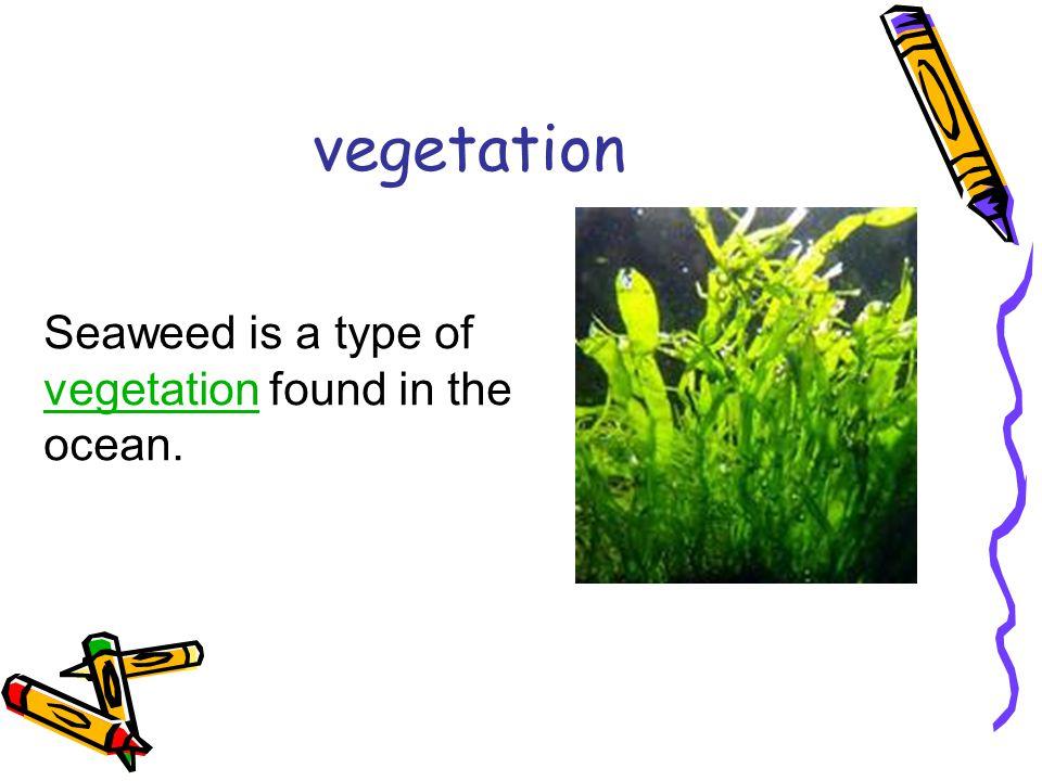 vegetation Seaweed is a type of vegetation found in the ocean. vegetation