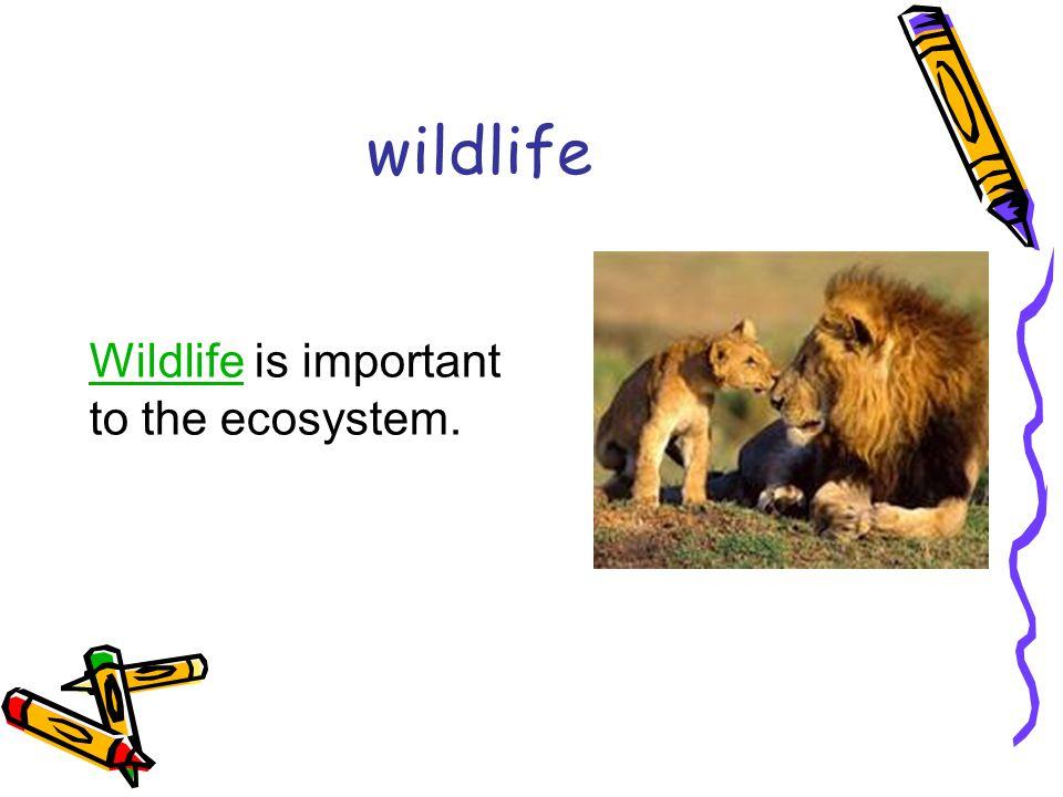wildlife WildlifeWildlife is important to the ecosystem.