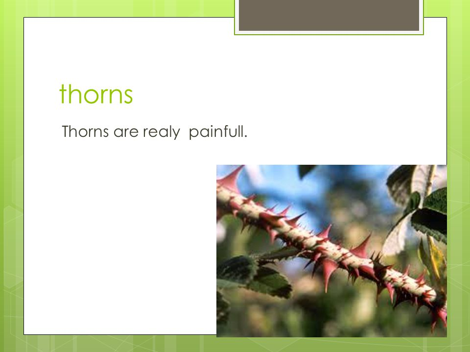 thorns Thorns are realy painfull.