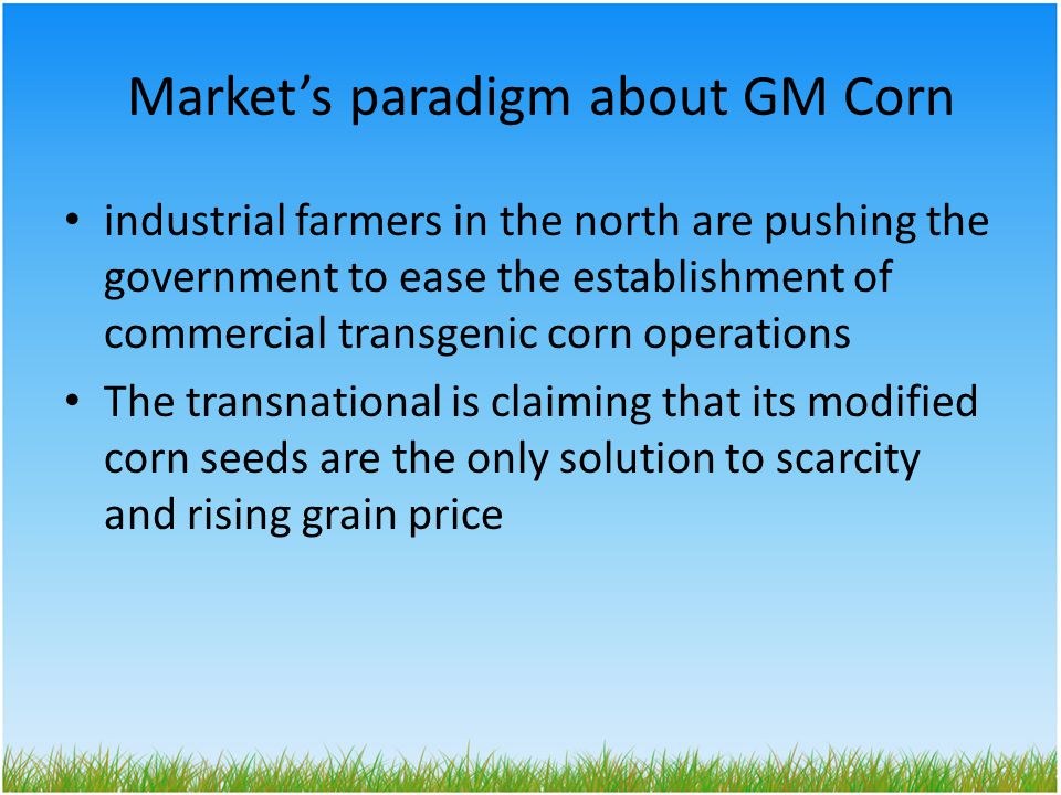 Market's paradigm about GM Corn industrial farmers in the north are pushing the government to ease the establishment of commercial transgenic corn operations The transnational is claiming that its modified corn seeds are the only solution to scarcity and rising grain price