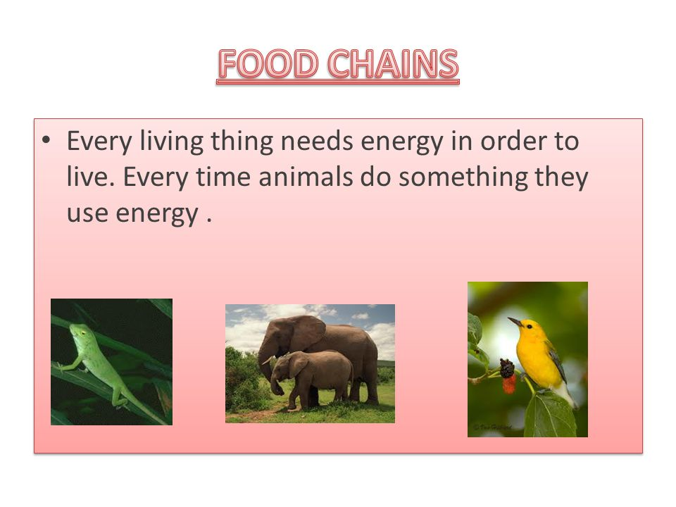 Every living thing needs energy in order to live. Every time animals do something they use energy.