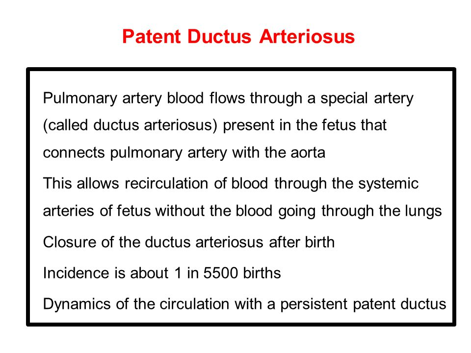 Patent Ductus Arteriosus Pulmonary artery blood flows through a special artery (called ductus arteriosus) present in the fetus that connects pulmonary artery with the aorta This allows recirculation of blood through the systemic arteries of fetus without the blood going through the lungs Closure of the ductus arteriosus after birth Incidence is about 1 in 5500 births Dynamics of the circulation with a persistent patent ductus