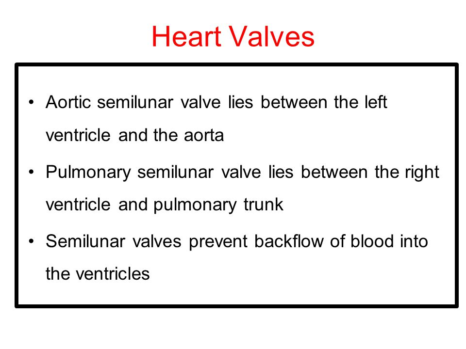 Heart Valves Aortic semilunar valve lies between the left ventricle and the aorta Pulmonary semilunar valve lies between the right ventricle and pulmonary trunk Semilunar valves prevent backflow of blood into the ventricles