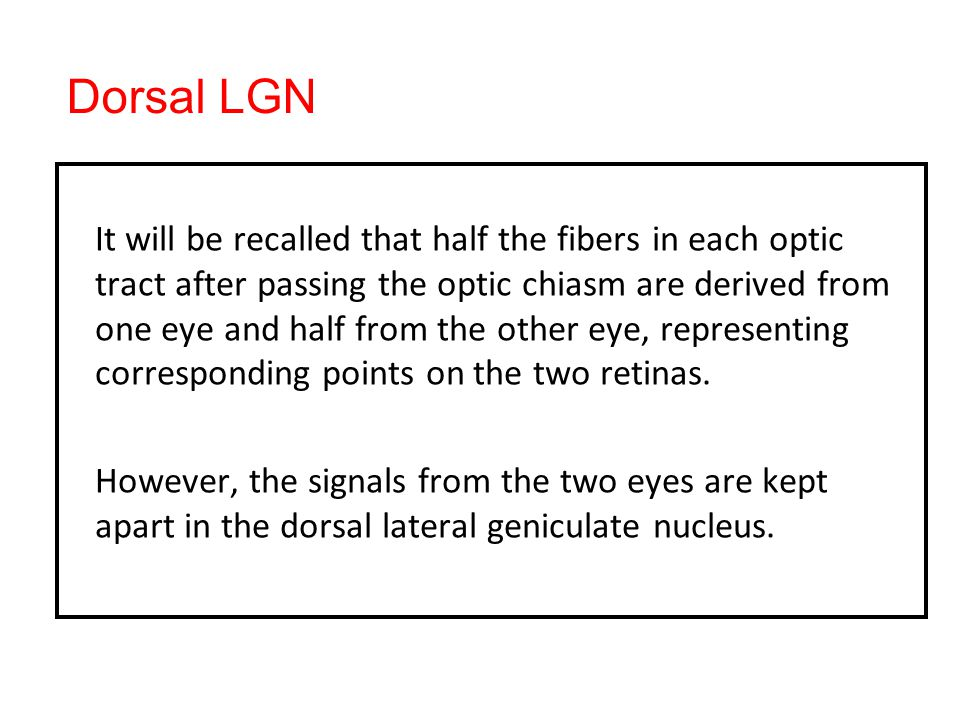 Dorsal LGN It will be recalled that half the fibers in each optic tract after passing the optic chiasm are derived from one eye and half from the other eye, representing corresponding points on the two retinas.
