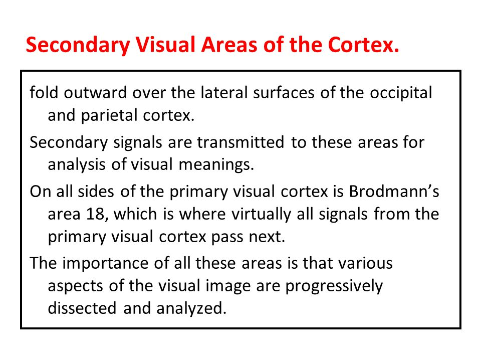 Secondary Visual Areas of the Cortex.