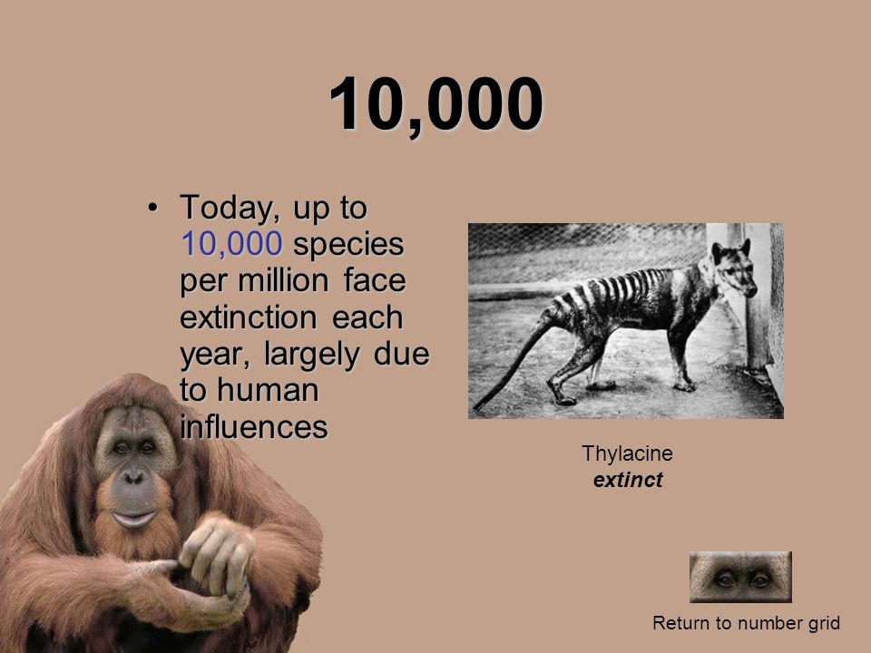 10,000 Today, up to 10,000 species per million face extinction each year, largely due to human influencesToday, up to 10,000 species per million face