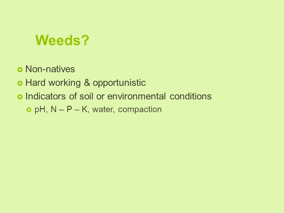 Weeds?  Non-natives  Hard working & opportunistic  Indicators of soil or environmental conditions  pH, N – P – K, water, compaction