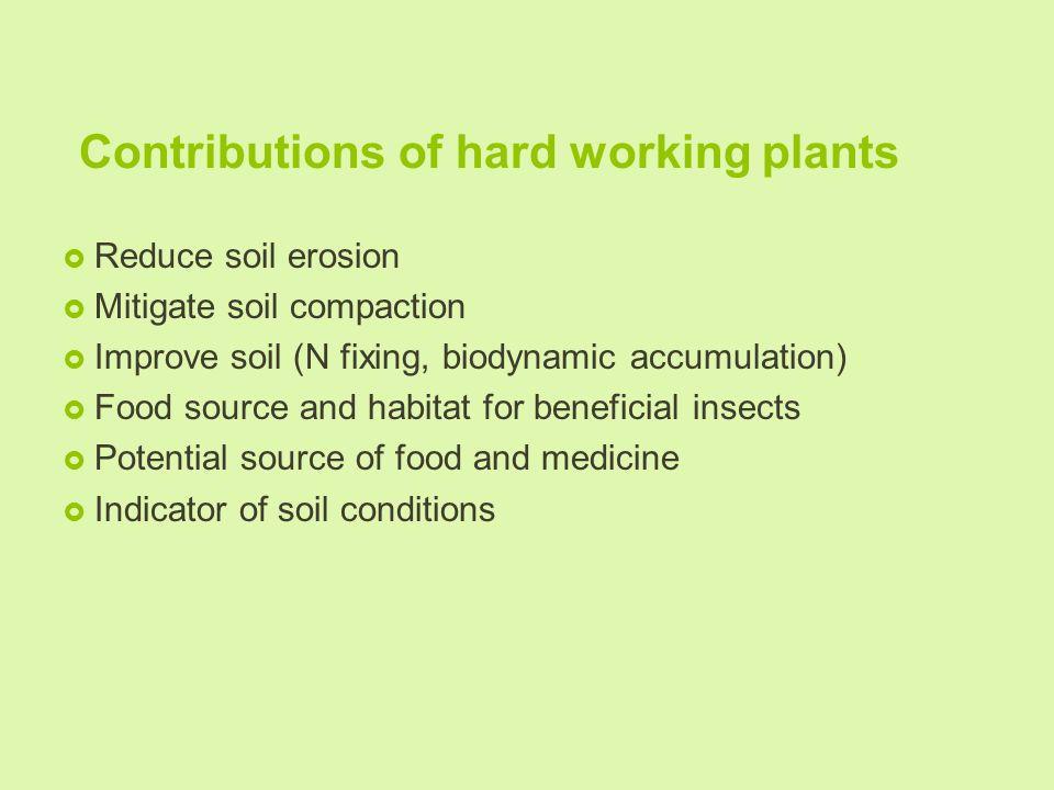 Contributions of hard working plants  Reduce soil erosion  Mitigate soil compaction  Improve soil (N fixing, biodynamic accumulation)  Food source and habitat for beneficial insects  Potential source of food and medicine  Indicator of soil conditions