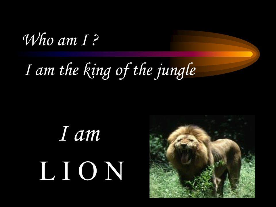 Who am I ? I am the king of the jungle L I O N I am