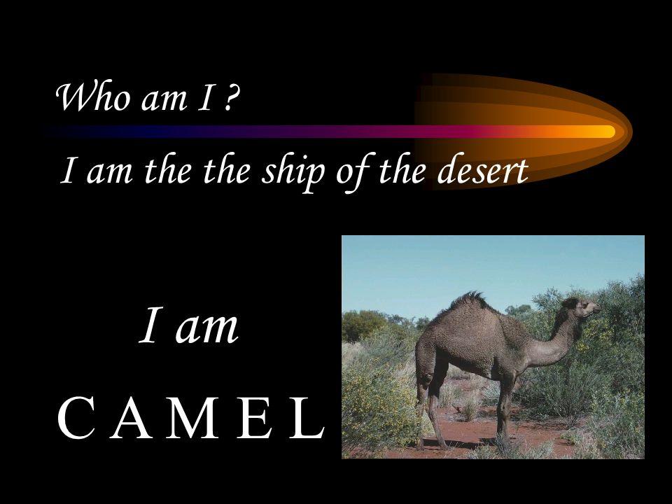 Who am I ? I am the the ship of the desert C A M E L I am