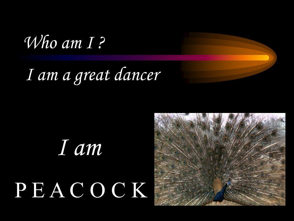 Who am I ? I am a great dancer P E A C O C K I am