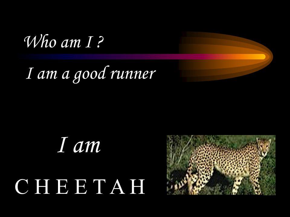 Who am I ? I am a good runner C H E E T A H I am