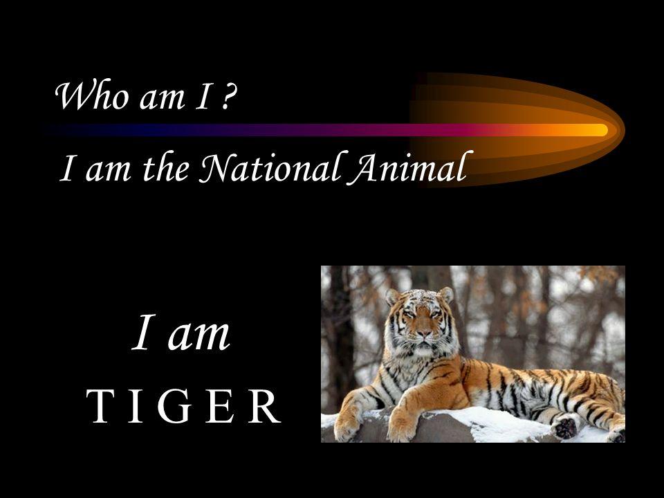 Who am I I am a good runner C H E E T A H I am