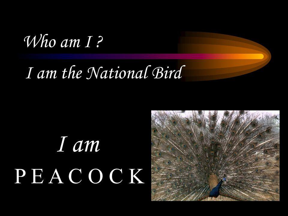 Who am I ? I am the National Bird P E A C O C K I am